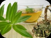 grüner tee wirkung ziehzeit